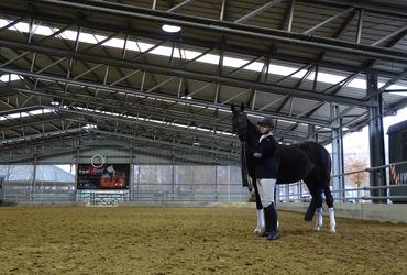 Horse arena small horse black jockey steel construction