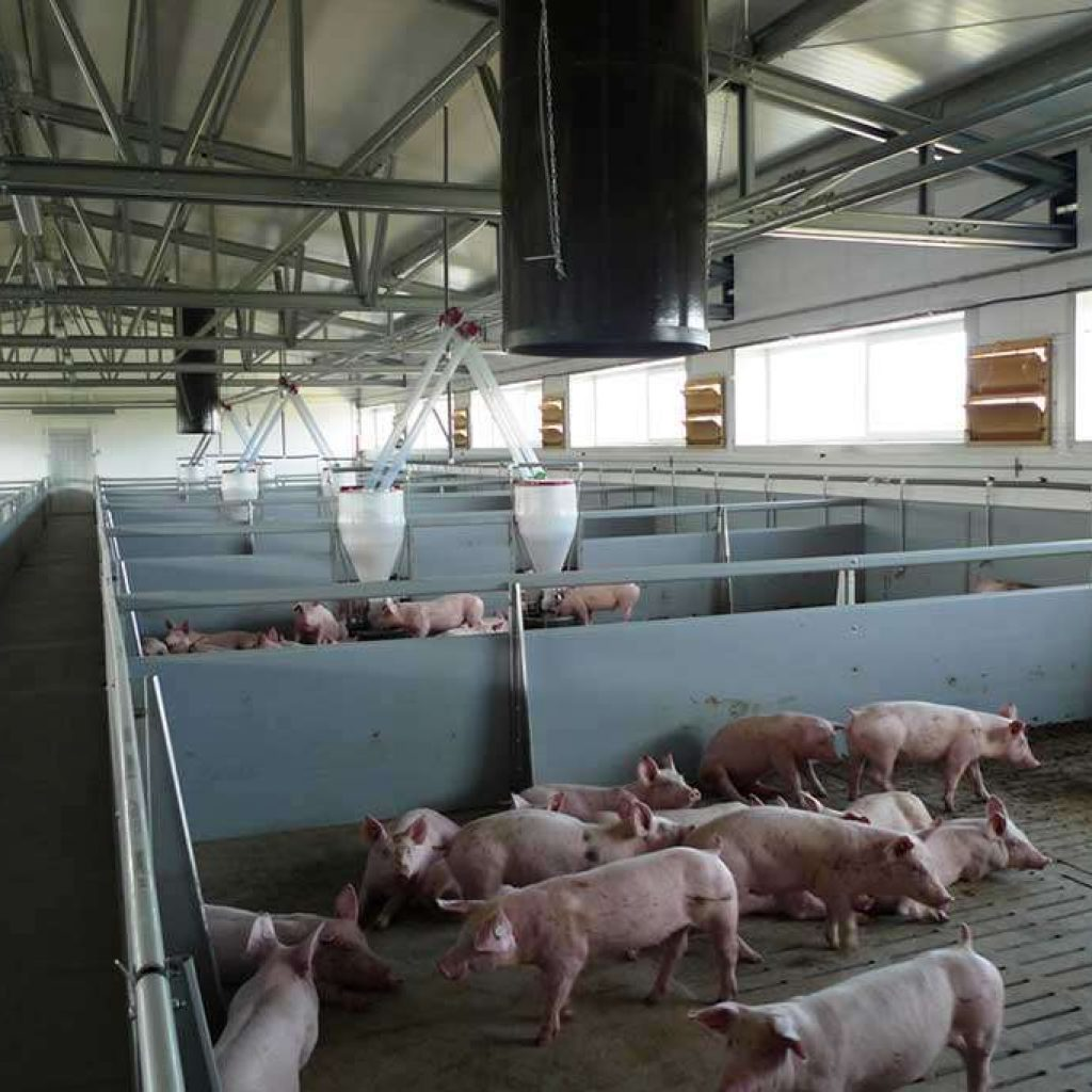pig farms steel breeding farming agriculture