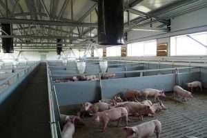 pig farms steel breeding farming agriculture