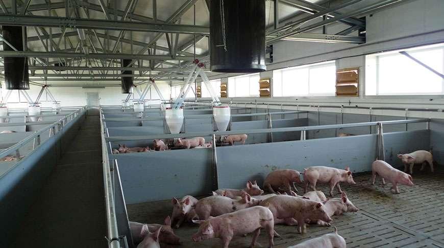Case Study Pig Farm Agricultural Buildings Frisomat Com