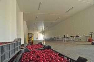 vegetable storage buildings metal halls PEB