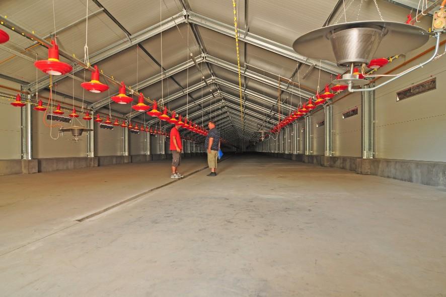 chicken farm broiler