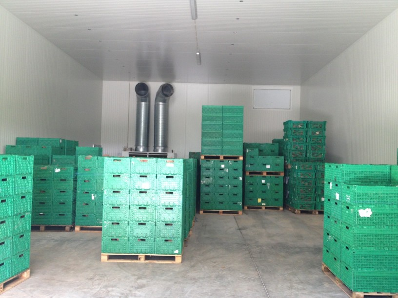 vegetable storage solutions